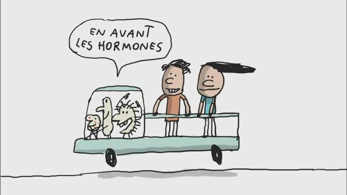 en avant les hormones.jpg